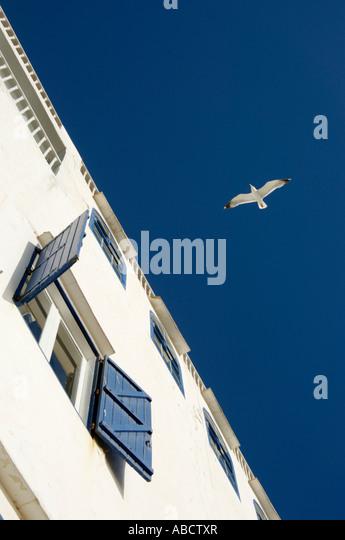 Seagull in flight, Essaouira, Morocco - Stock-Bilder