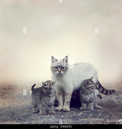 Homeless Kittens  Beside Their Mother Cat - Stock Image