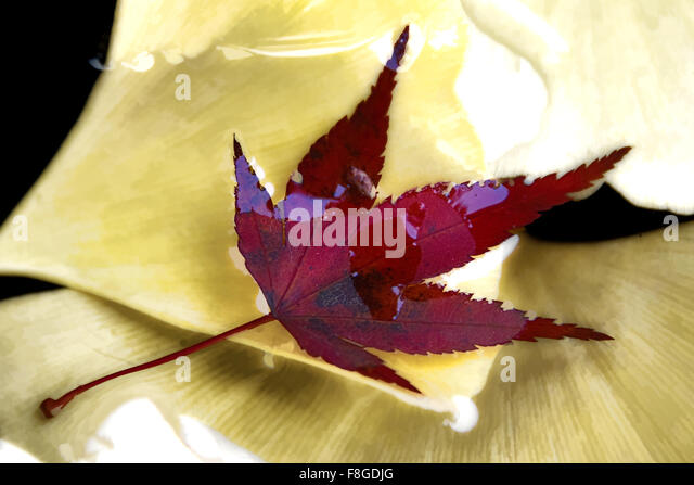 Leaf in Water - Stock Image