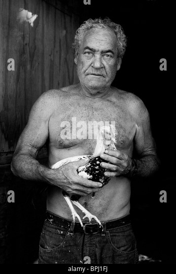Black and white portrait of senior man holding fighting cock - Stock Image