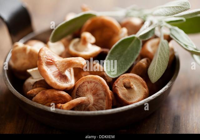shiitake mushrooms - Stock-Bilder