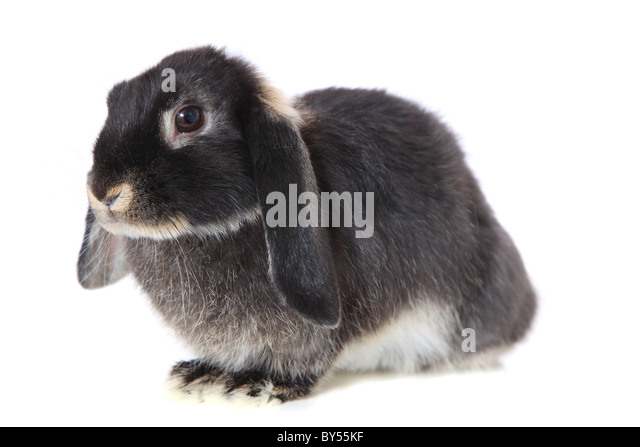 Cute little rabbit. All on white background. - Stock Image