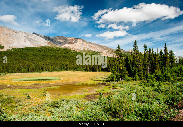 Forest glade in Banff National Park, Canada - Stock Image