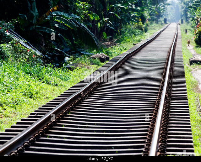 Railway tracks in jungle - Stock-Bilder