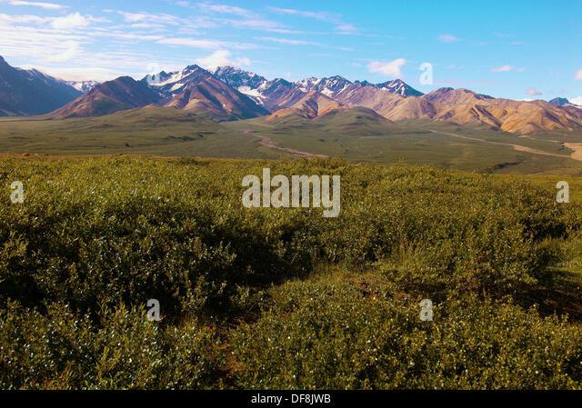 Alaska Range from Polychrome Pass,  Denali National Park, Alaska - Stock Image