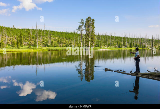 Angling on the Yellowstone river on a peaceful, serene morning flanked by pine woodland near Cooke City in Yellowstone - Stock Image