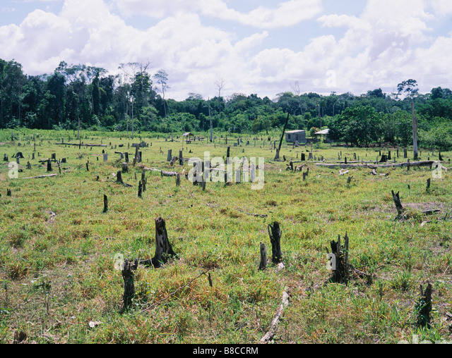 Tropical rainforest destroyed - Stock Image
