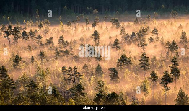 Morning fog and sunrise in Torronsuo National Park, Finland - Stock Image