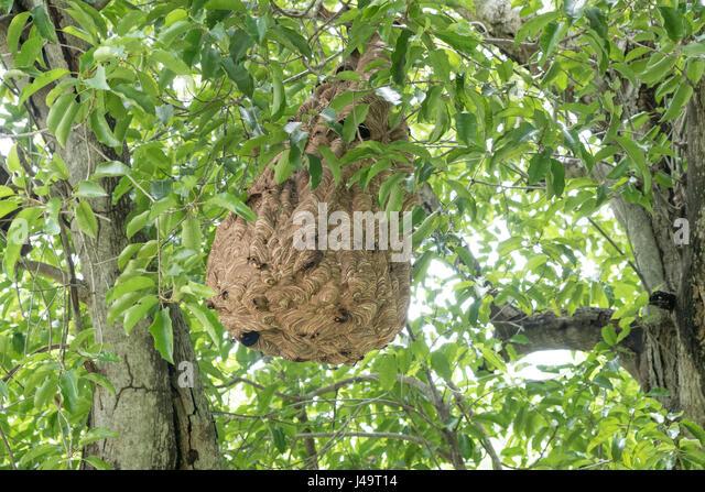 Wasp Swarm Stock Photos & Wasp Swarm Stock Images - Alamy