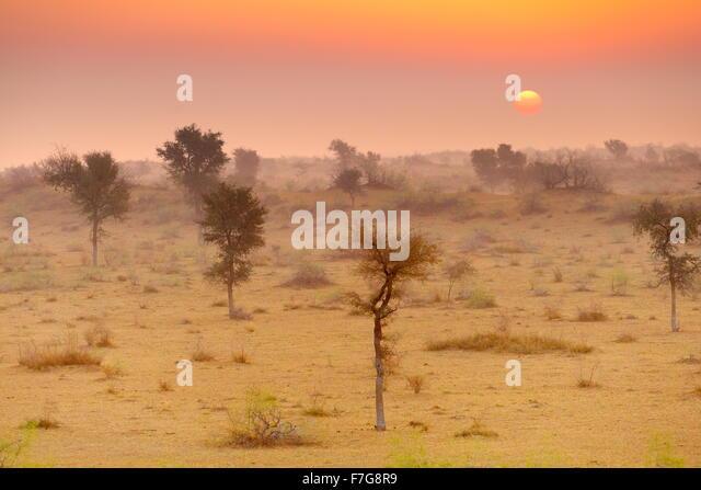 Sunrise in Thar desert near Jaisalmer, Rajasthan, India - Stock-Bilder