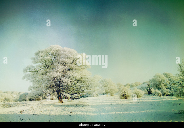 snow covered landscape - Stock-Bilder