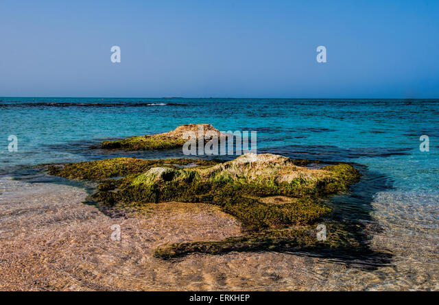 Small island near the sea shore covered with algae at high tide - Stock Image