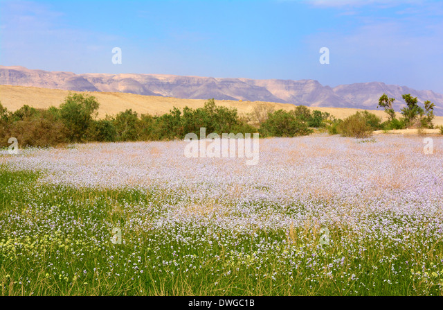 Spring  time near the Dead sea, Israel - Stock Image