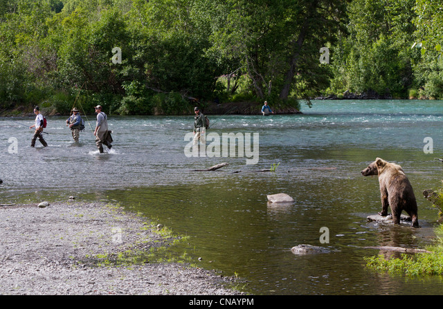 A mature Brown bear walks along the shore of Russian River as fishermen try to keep their distance, Kenai Peninsula, - Stock Image