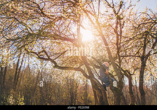 Boy climbing a tree - Stock Image