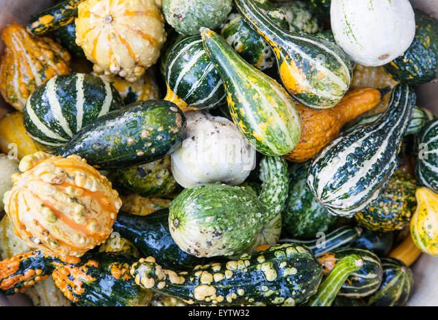 Various squash and pumpkin variants - Stock Image