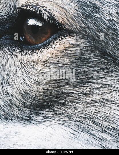 Close-up dog's eye - Stock-Bilder