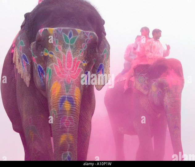 Three elephants at an elephant festival, Jaipur, Rajasthan, India - Stock-Bilder