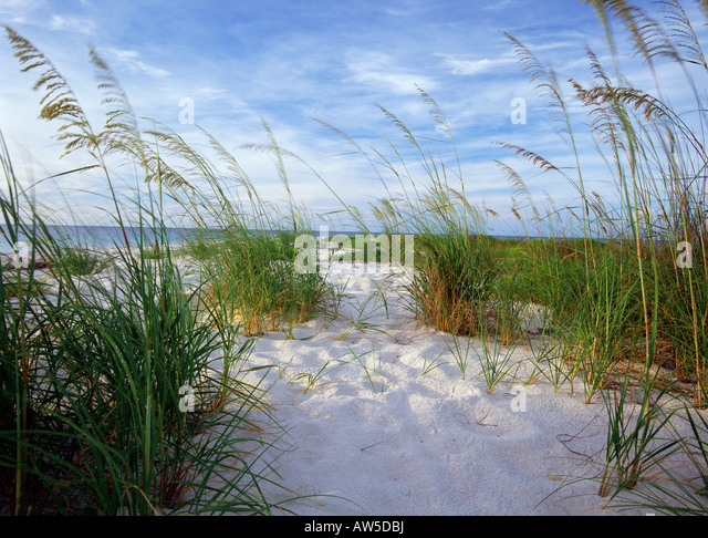 Seagrass florida stock photos seagrass florida stock for Seagrass for landscaping