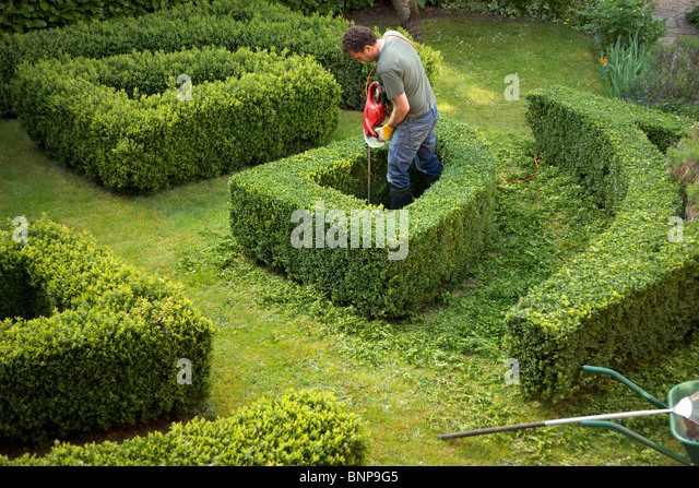 Gardener pruning a hedge in a maze with electrical trimmer, elevated view - Stock-Bilder
