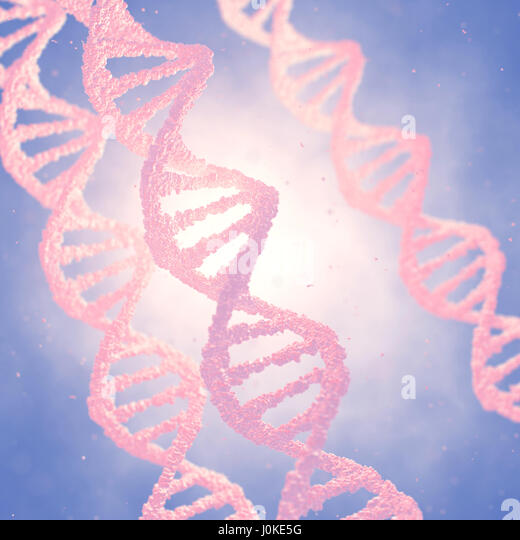 Dna double helix molecules and chromosomes , Genetic engineering - Stock Image
