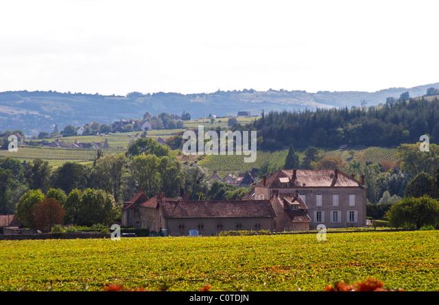 vineyard a chateau mercurey burgundy france - Stock Image