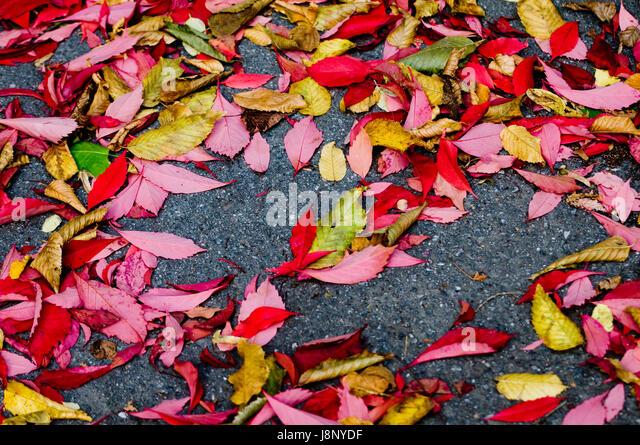 Leaves on ground - Stock-Bilder