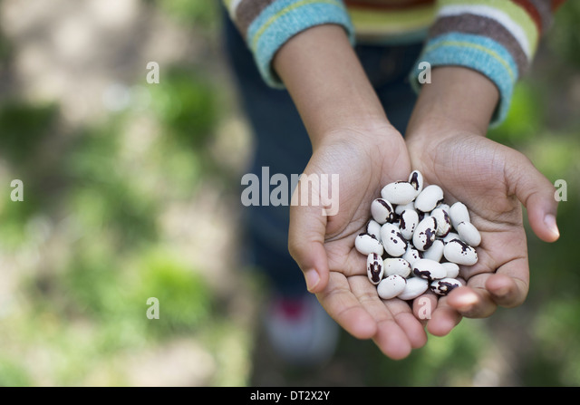 A young boy holding out a handful of beans - Stock Image