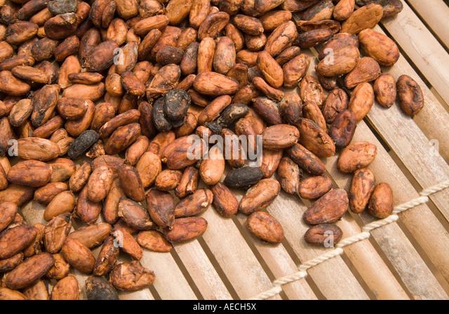 Cocoa beans, Ghana - Stock Image
