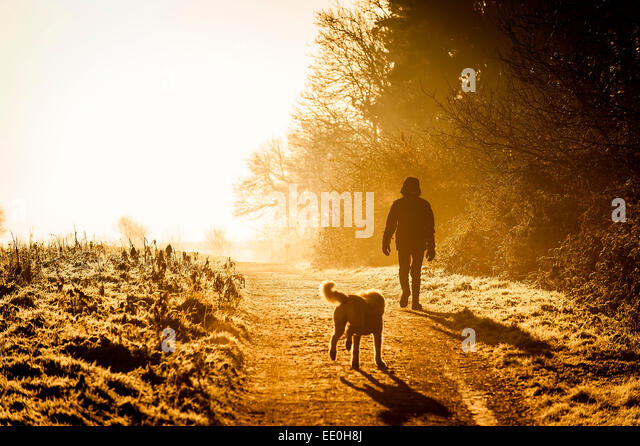 A man walking his dog in the intense sunlight of an early morning sunrise in Thorndon Park in Essex. - Stock Image