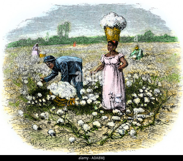 African  American slaves picking cotton on a plantation in the Deep South 1800s - Stock-Bilder