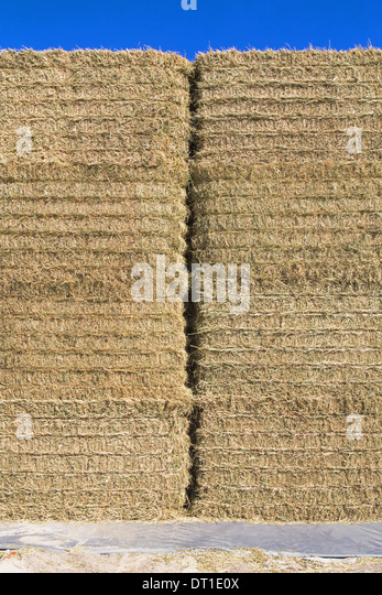 Washington State USA tall stack of hay bales in farmyard packed - Stock Image
