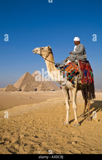 Camel & driver at the Pyramids, Giza, Cairo, Egypt - Stock Image