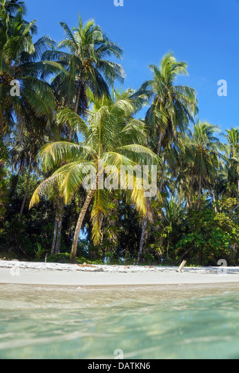 View from the water surface on a tropical sandy beach with coconut trees, Caribbean sea - Stock Image