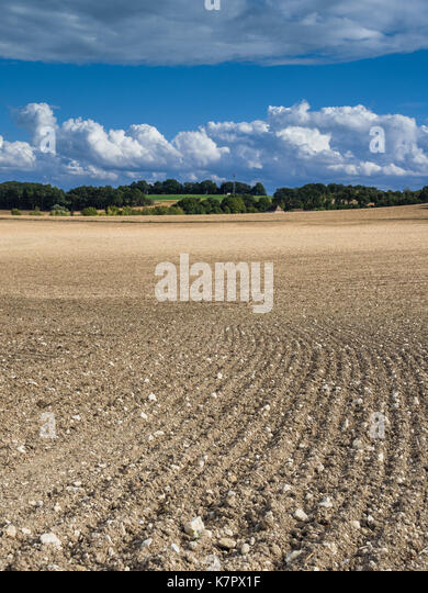Cultivated farmland, Touraine, France. - Stock Image