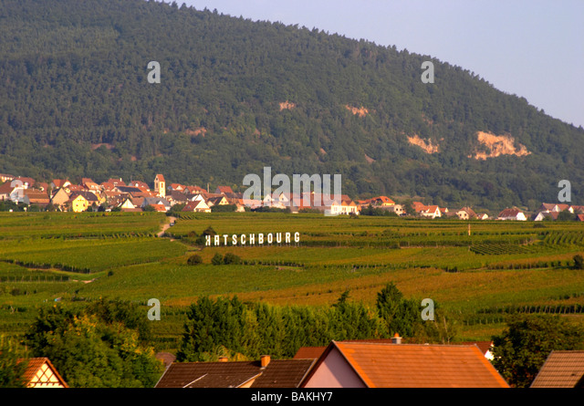 vineyard alsace france - Stock Image