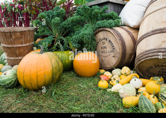 A display of Farm Produce at an old time fair. Pumpkins, squash and melons dominate a display of the bounty of the - Stock Image