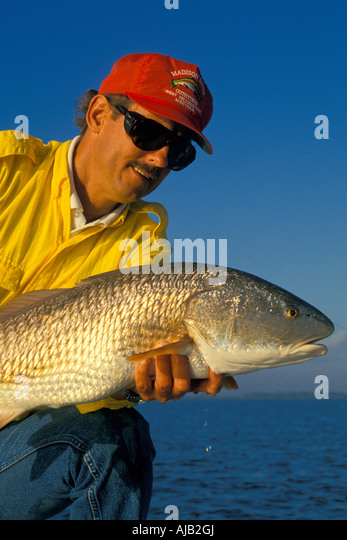 Fishing saltwater, red drum, red fish, man holding large redfish, florida, fl, fla, sun sunny, blue sky, bs, sport, - Stock Image