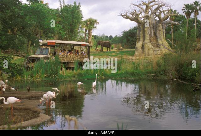 Disney World Animal Kingdom African Safari truck baobob trees - Stock Image