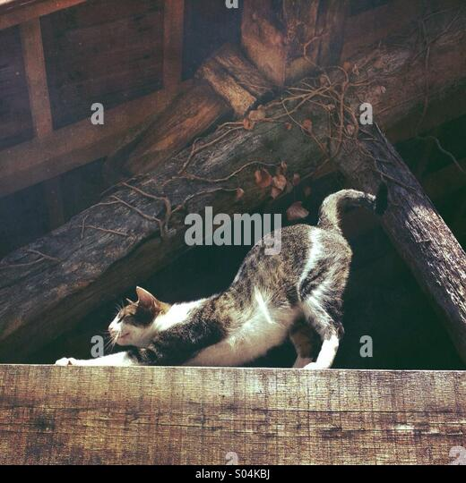 Cat stretching with curled tail - Stock-Bilder