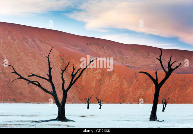 Dead trees and red dunes in the Dead Vlei, Sossusvlei, Namibia - Stock Image