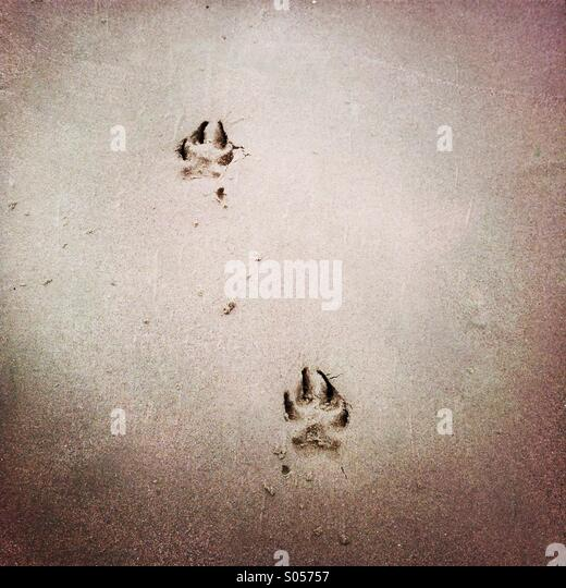 Dog paw prints in the sand. - Stock Image