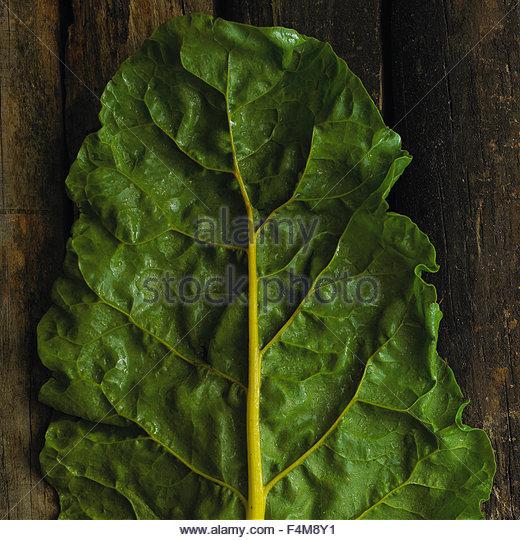 Organic chard leaf - Stock-Bilder
