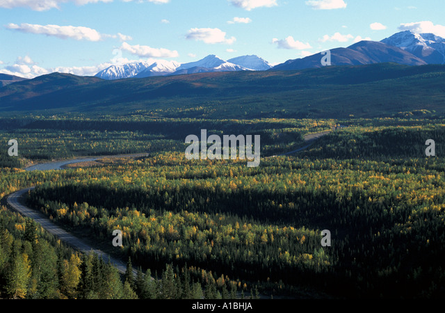 Alaska wilderness forest fall color - Stock Image