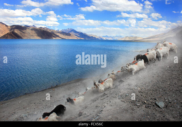 Pangong Tso, Lake in Ladakh, North India - Stock Image