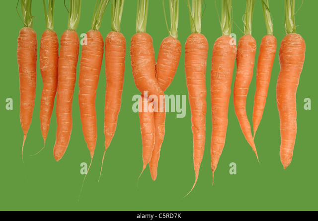 Carrots in a row - Stock Image