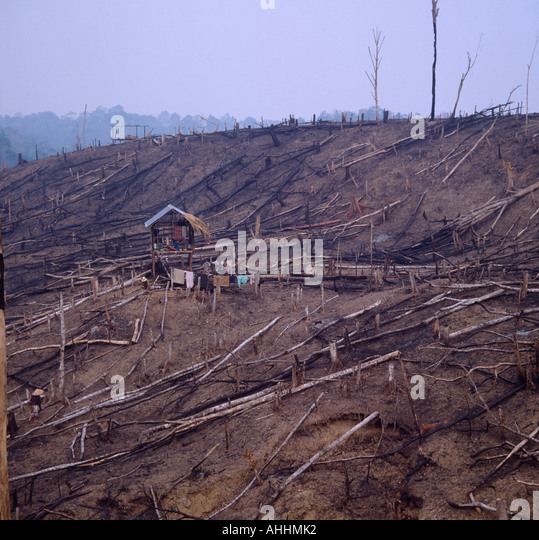 INDONESIA Southeast Asia Sumatra Deforestation. Family in hut at centre of recently cleared forest. - Stock Image