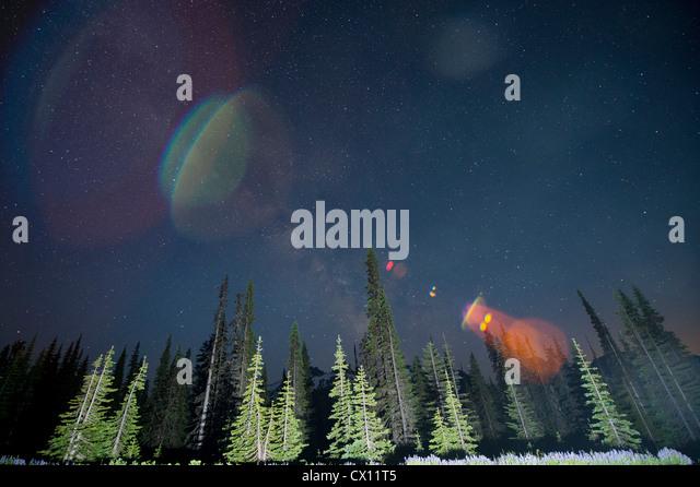 Lens flare over trees, Mount Rainier, Washington, USA - Stock Image