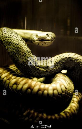 Snake in jar - Stock Image