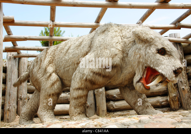 saber tooth tiger stock photos amp saber tooth tiger stock